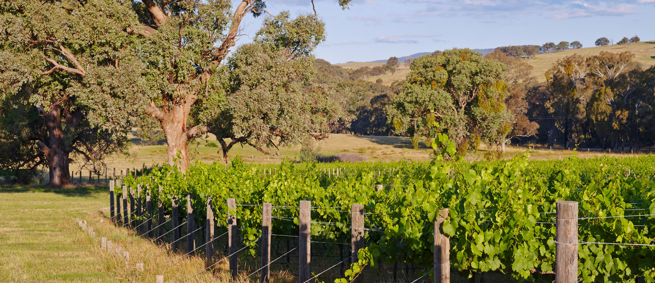 slide-vineyards-04-1